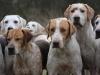 hsc2-hounds
